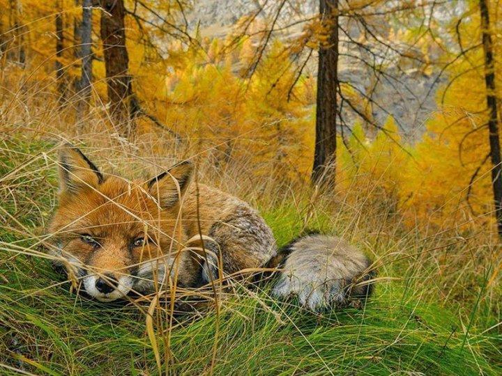 20 самых шедевральных снимков, сделанных для National Geographic - №17