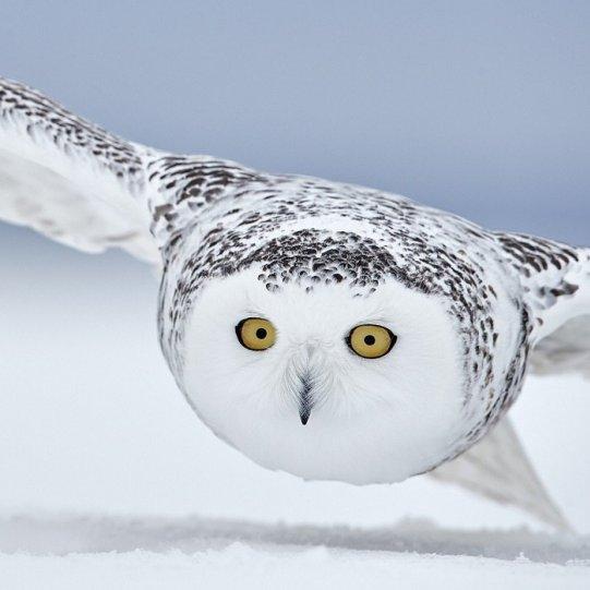 Bird Photographer of the Year - №17