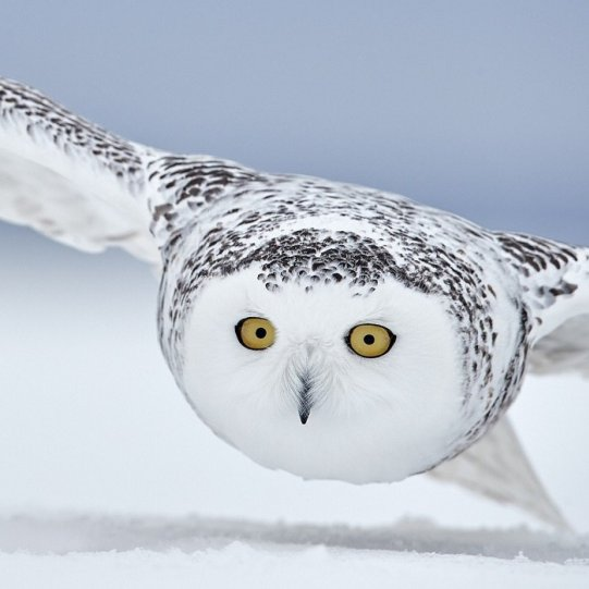 Bird Photographer of the Year - №17