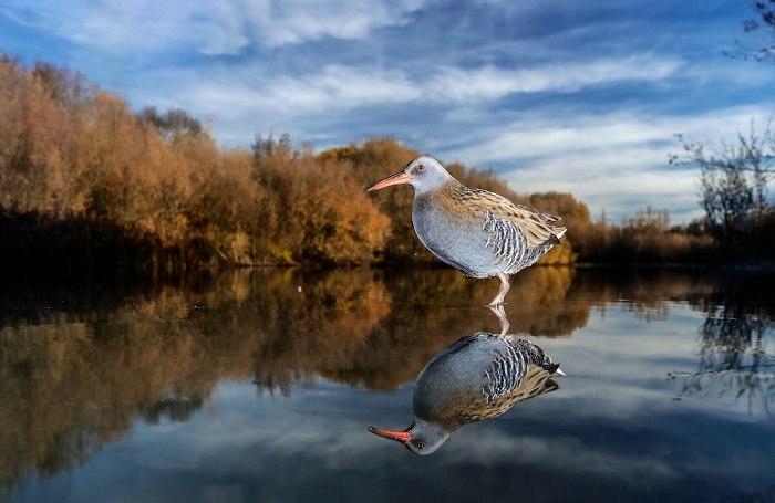 Bird Photographer of the Year - №12