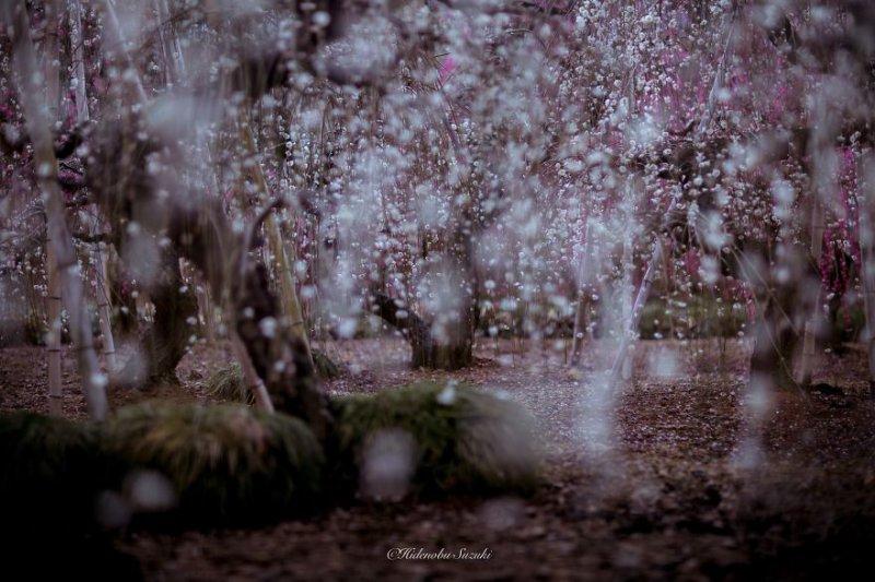 Фотограф Хиденобу Сузуки - №1