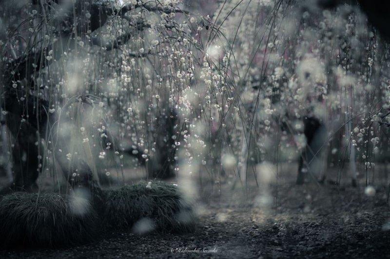 Фотограф Хиденобу Сузуки - №5