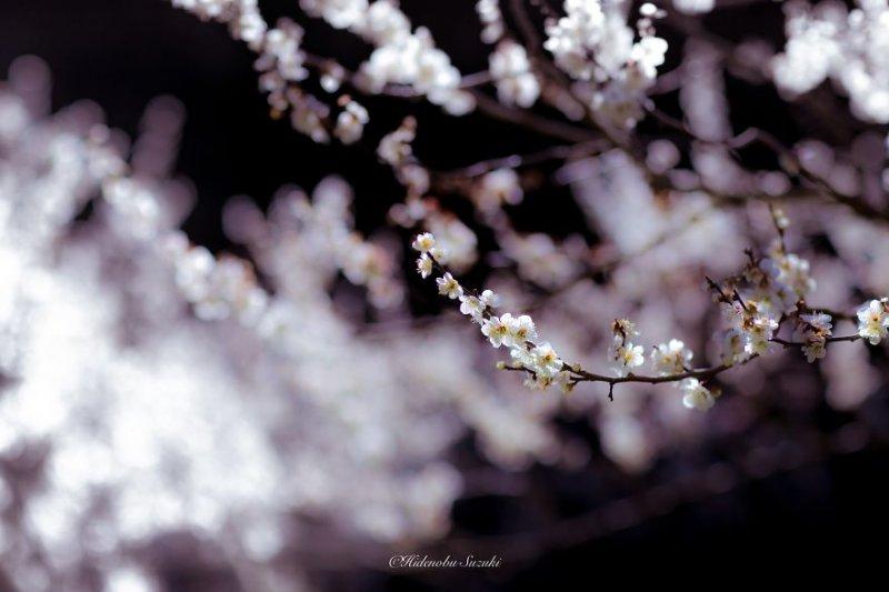 Фотограф Хиденобу Сузуки - №9