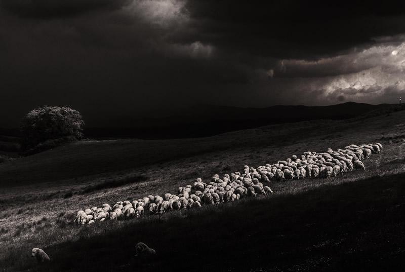 Фотограф Марко Сгарби - №2