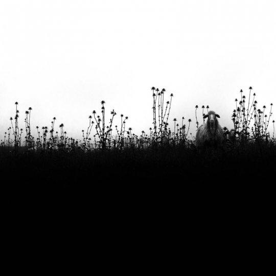 Фотограф Марко Сгарби - №6