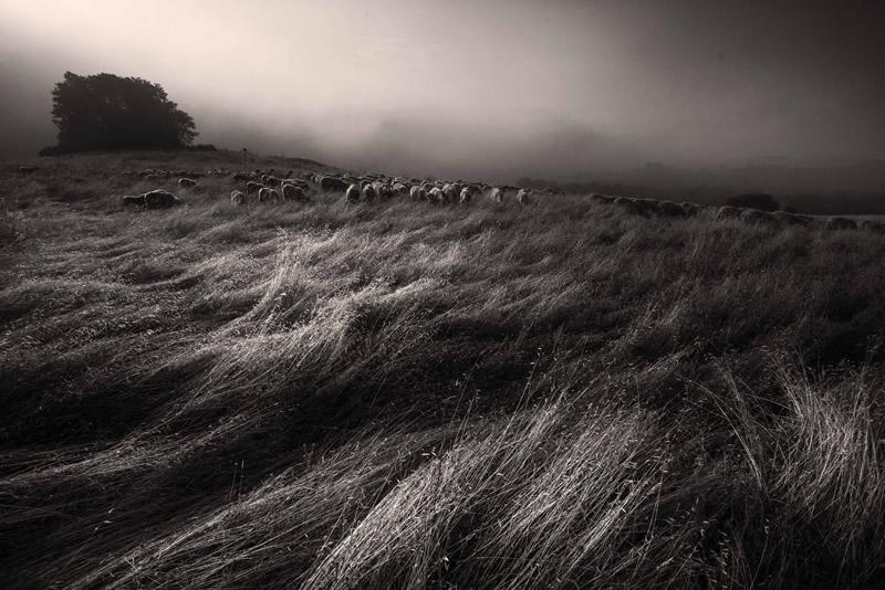 Фотограф Марко Сгарби - №18