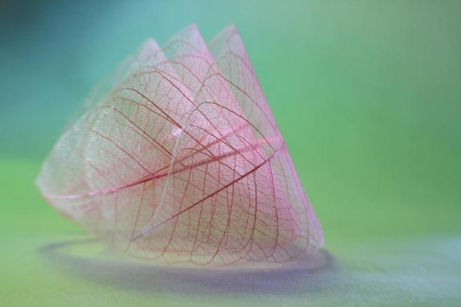 Абстрактное искусство в простых листьях - №4