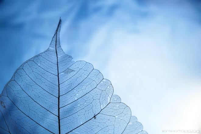 Абстрактное искусство в простых листьях - №2