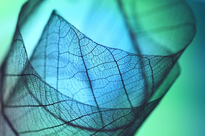 Абстрактное искусство в простых листьях - №8
