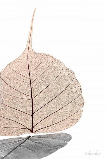 Абстрактное искусство в простых листьях - №19