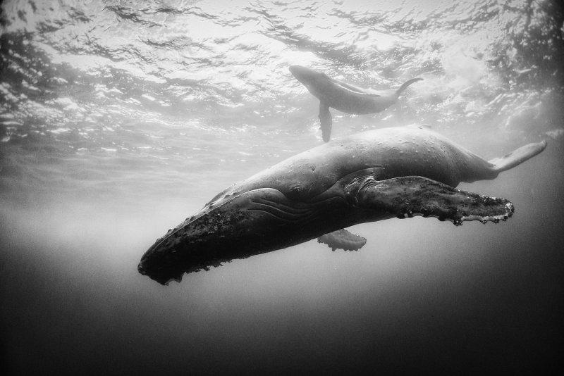 Жизнь под водой от фотографа Ануара Патьяне - №6