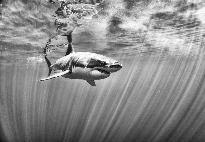 Жизнь под водой от фотографа Ануара Патьяне - №7