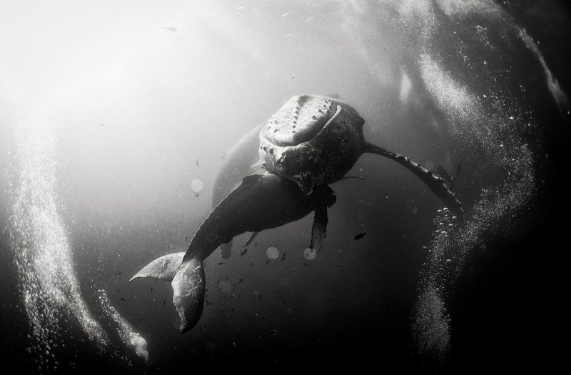 Жизнь под водой от фотографа Ануара Патьяне - №17