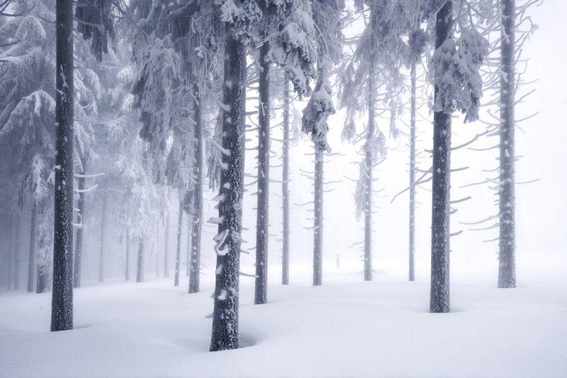 Килиан Шоенбергер «Зимняя сказка» - №8