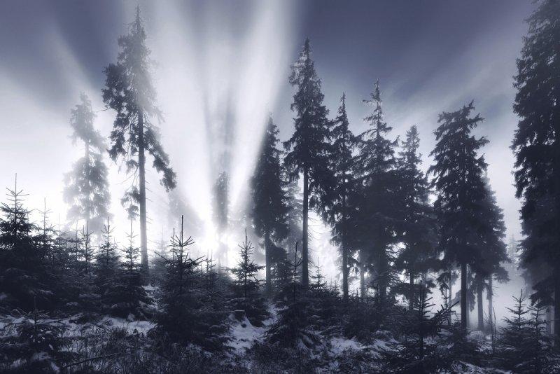 Килиан Шоенбергер «Зимняя сказка» - №23