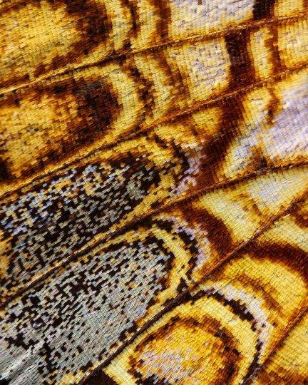 «Крылья бабочек». Фотограф Крис Перани - №5