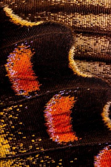 «Крылья бабочек». Фотограф Крис Перани - №15