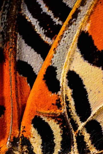«Крылья бабочек». Фотограф Крис Перани - №19