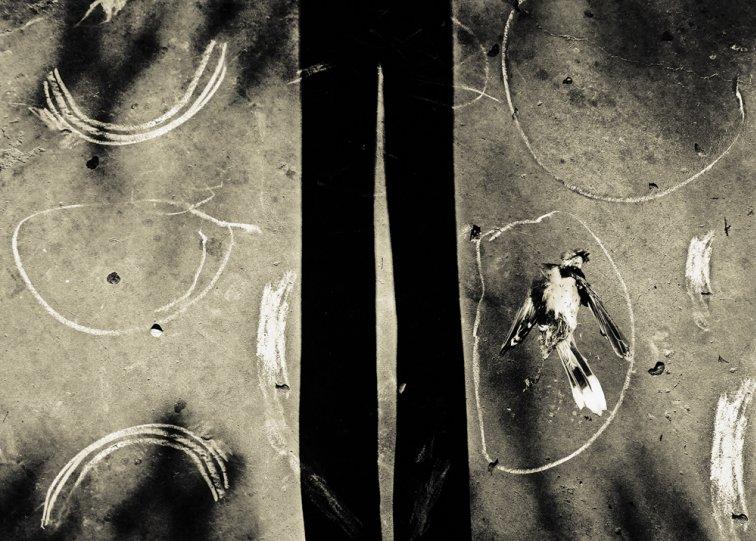 «Блуждающие сны». Фотограф Анджела Бэкон-Кидвелл - №16