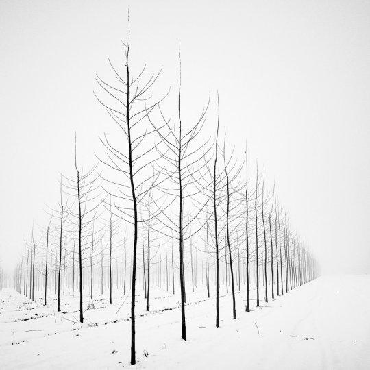 Пейзажные фотографии Пьера Пеллегрини - №1