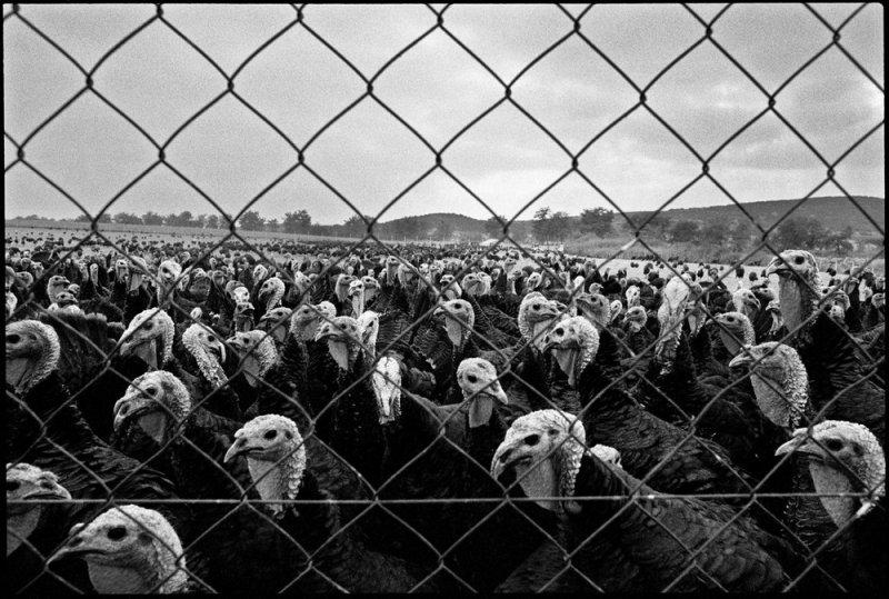 Греческий фотограф Никос Экономопулос - №15