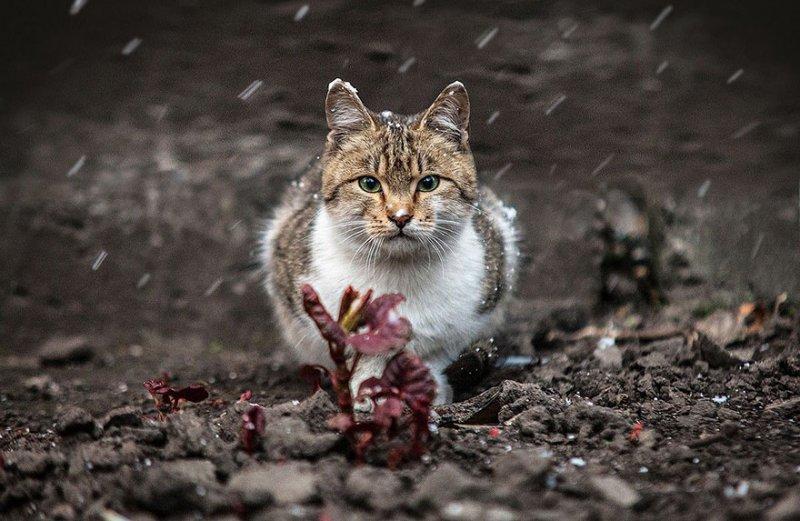 Фотограф Сергей Полюшко - №10