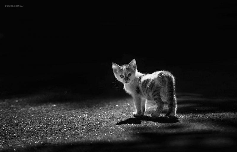 Фотограф Сергей Полюшко - №16