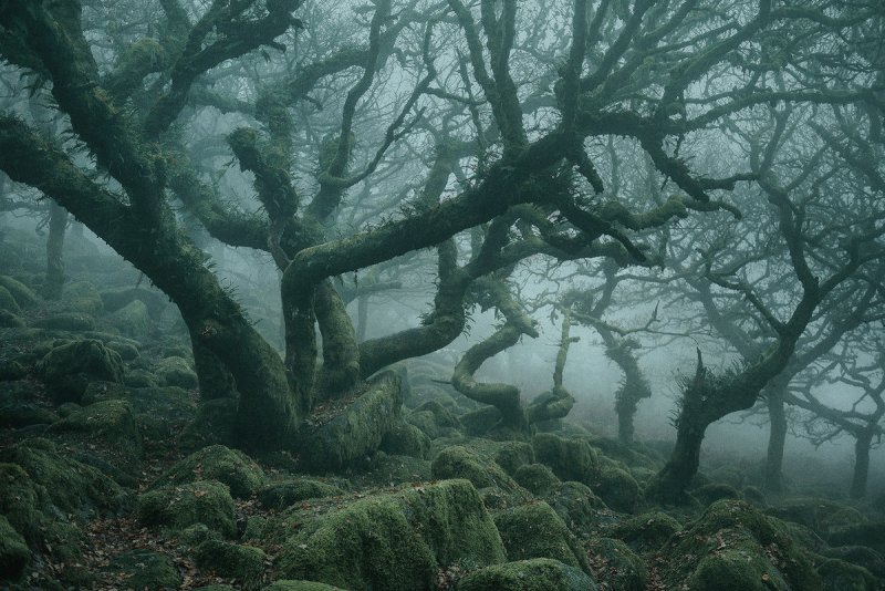 Туманный лес в фотографиях Нила Бернелла - №1