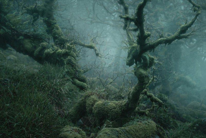Туманный лес в фотографиях Нила Бернелла - №3