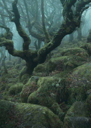 Туманный лес в фотографиях Нила Бернелла - №9