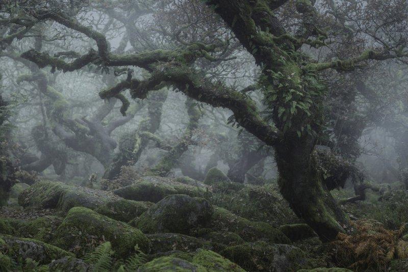 Туманный лес в фотографиях Нила Бернелла - №6
