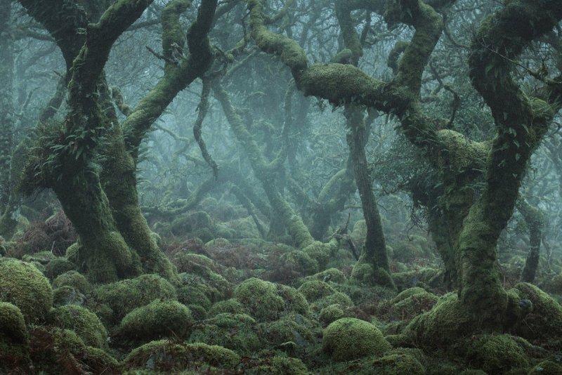 Туманный лес в фотографиях Нила Бернелла - №7