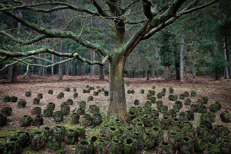Пейзажи Великобритании от Элли Дэвис - №2