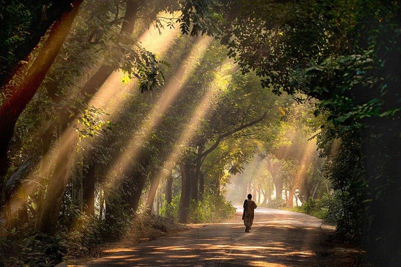 Прогулка по национальному парку Сатхари (Satchari) в Бангладеш. Автор фото: Абдул Момин.