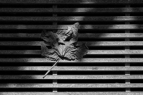 Фотограф Вивиан дель Ри - №13