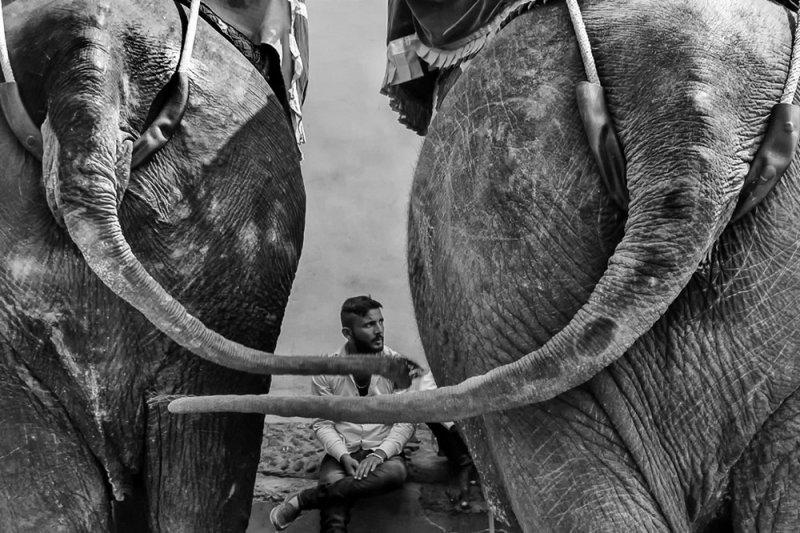 Фотограф Raj Sarkar - №11