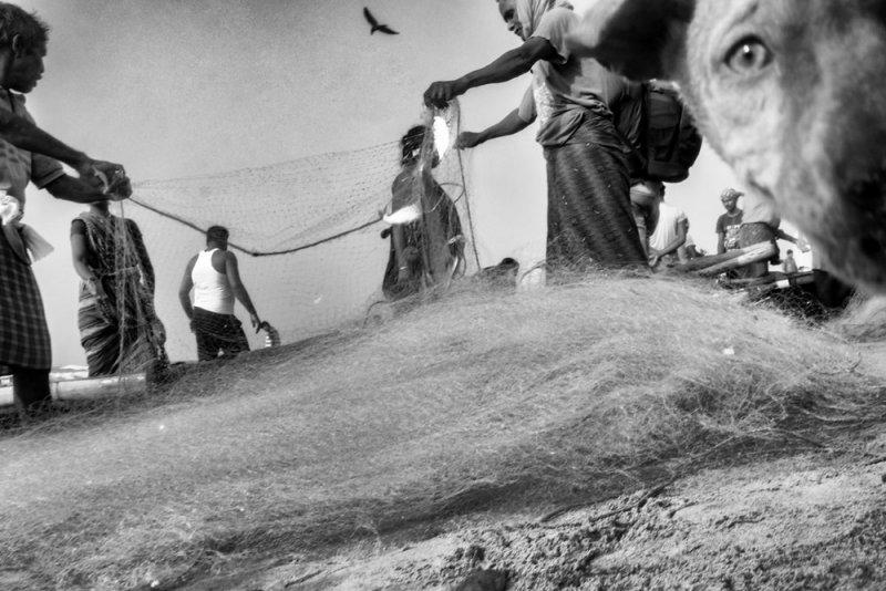 Фотограф Raj Sarkar - №15