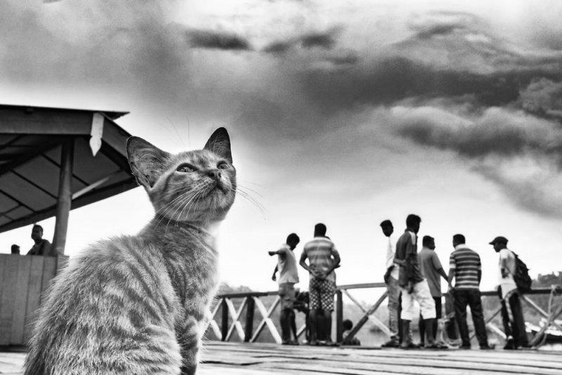 Фотограф Raj Sarkar - №19
