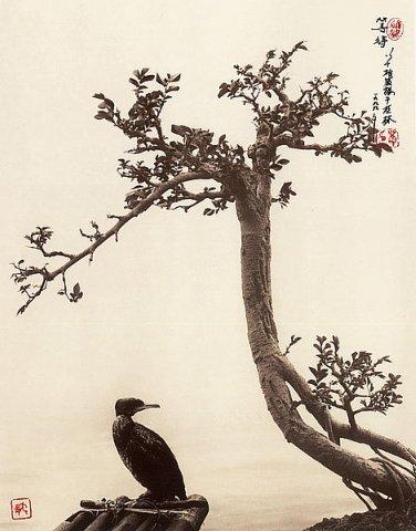 Фотограф Don Hong-Oai - №21