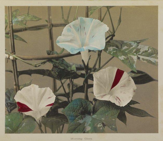 Японские цветы Огавы Кадзумасы - №3