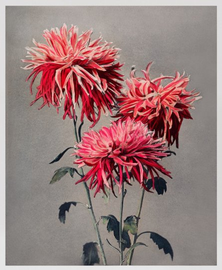 Японские цветы Огавы Кадзумасы - №27