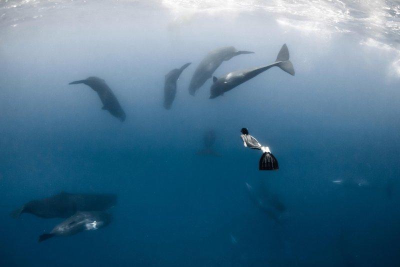 """""""Подводный мир"""" Alex Voyer - №8"""