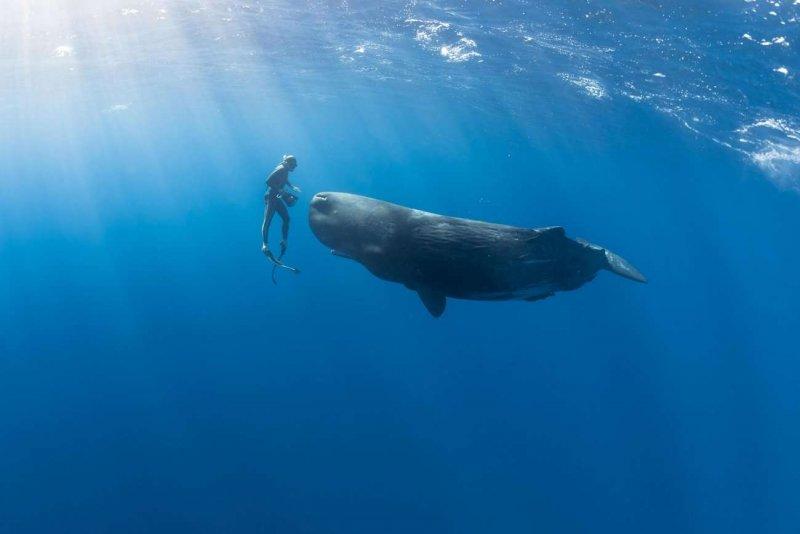 """""""Подводный мир"""" Alex Voyer - №9"""