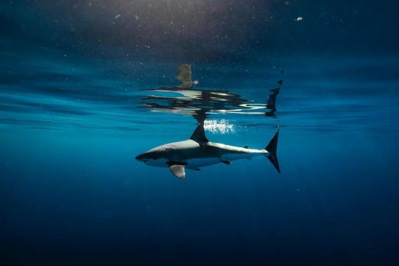 """""""Подводный мир"""" Alex Voyer - №16"""
