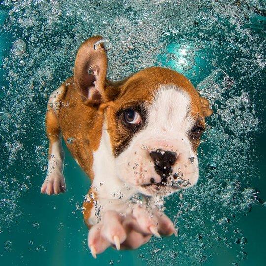 """Фотопроект """"Собаки под водой"""" - №1"""