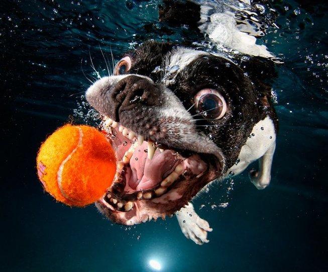 """Фотопроект """"Собаки под водой"""" - №3"""