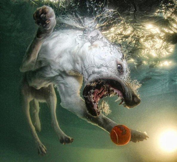 """Фотопроект """"Собаки под водой"""" - №5"""