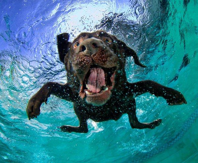 """Фотопроект """"Собаки под водой"""" - №7"""
