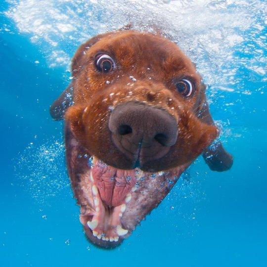 """Фотопроект """"Собаки под водой"""" - №9"""