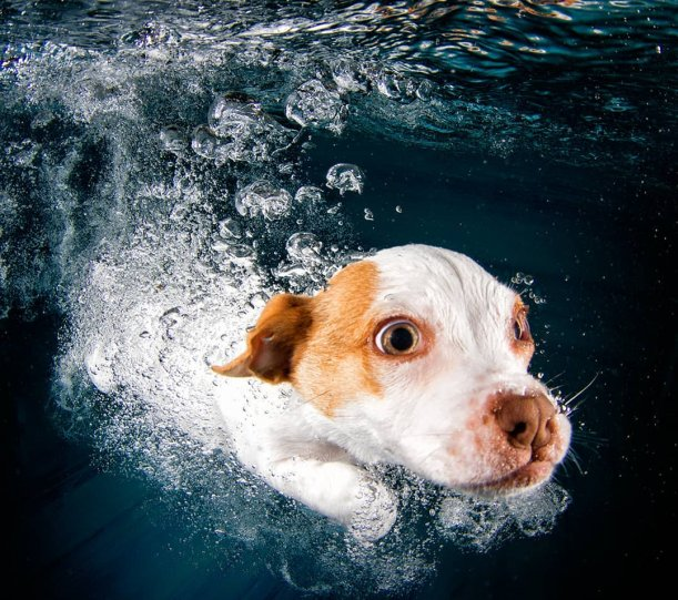 """Фотопроект """"Собаки под водой"""" - №11"""